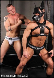 Mr S Pittbull harness